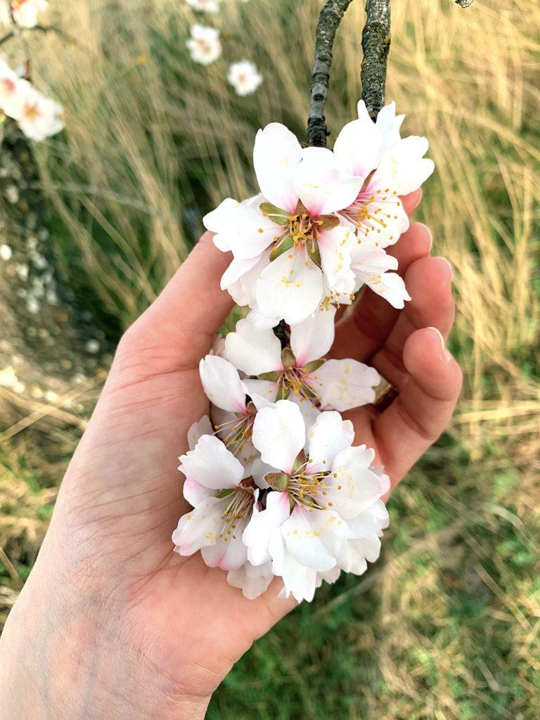 Fleurs blanches mains