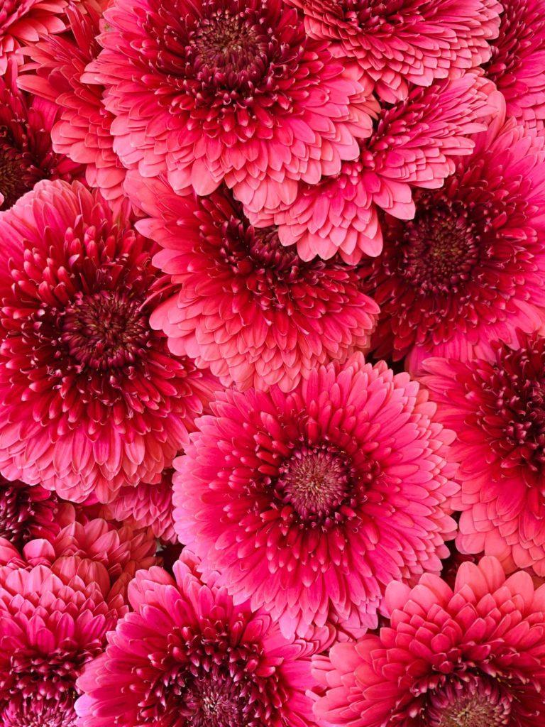 Amsterdam marché aux fleurs rose